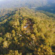 172572Into-the-Jungle-4.